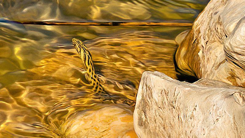 Die Schlange im See