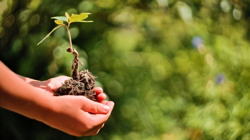 Umweltschutz: 50 Wege, um die Umwelt zu schützen - hier: Baum pflanzen, kleine Eiche, in Kinderhänden